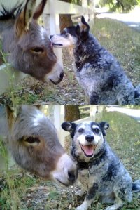 Unlikely animal friendships <3